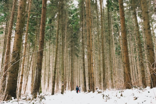 Couple walking through a forest of tall trees